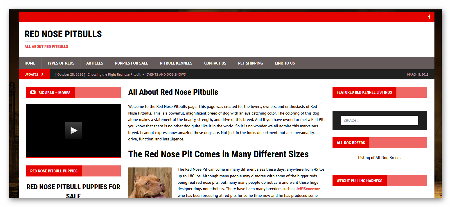 breederdesigns.com - red nose pitbulls