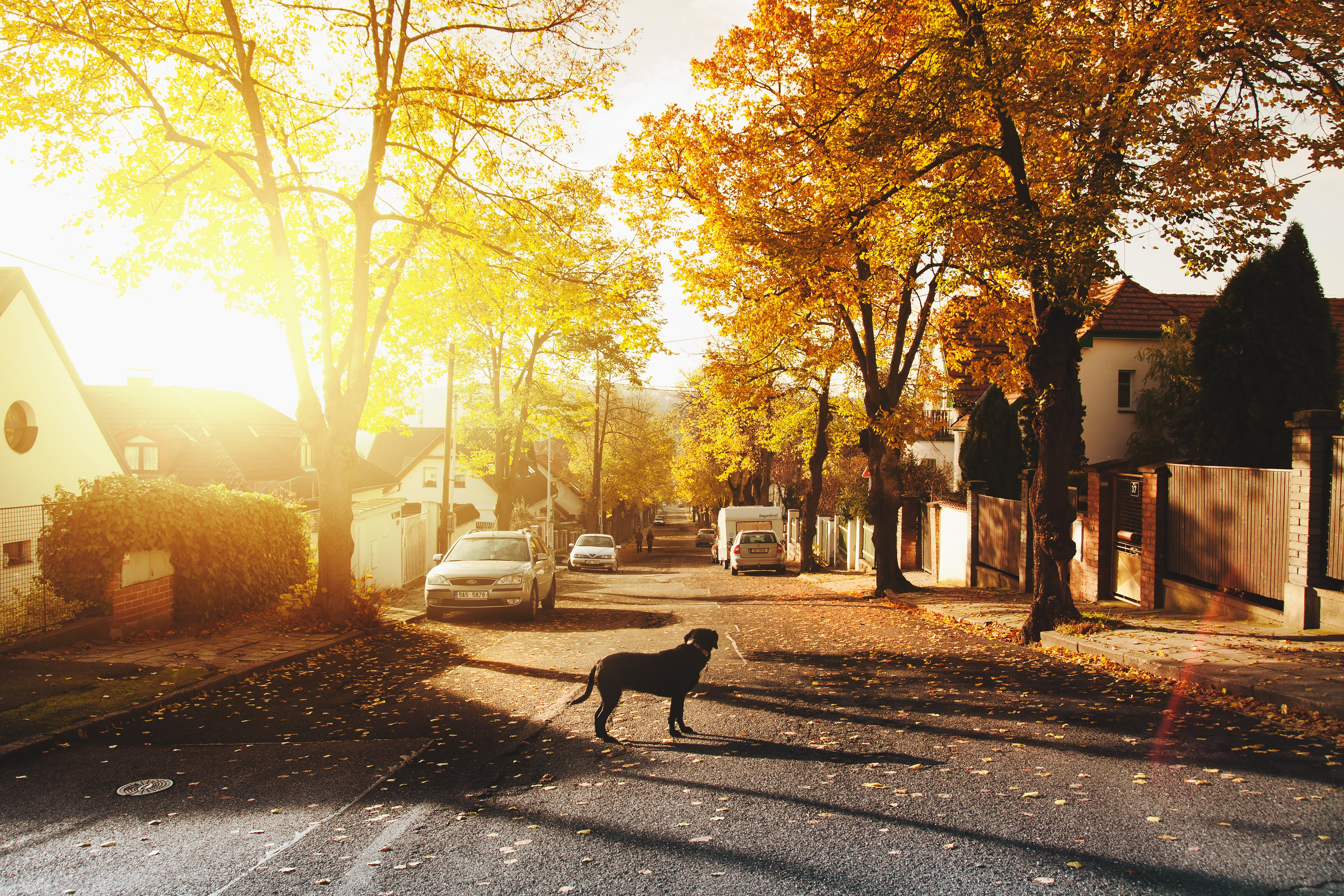 Read more about the article Households in Rural Areas Tend To Have More Pets